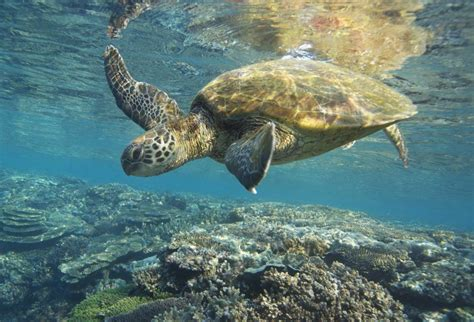 8 cool things you should know about sea turtles - Travel2Next