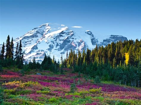 Nature Landscape, Mountains With Snow Forest Meadow