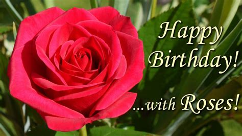 Happy Birthday Song with Roses - beautiful flowers