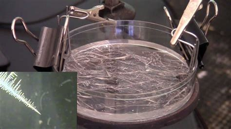 Reduction of Tin(II) Chloride in Aqueous Solution - YouTube