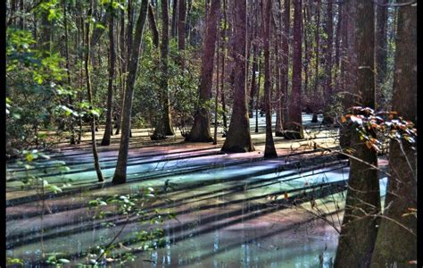 This Natural Phenomenon Occurring In Florida Swamps Is