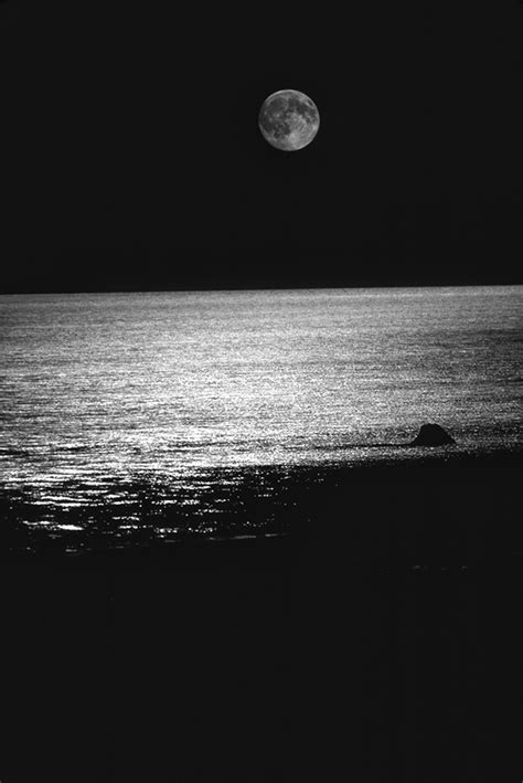Nature in Black and White – Photography by Dan Wray